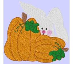 Pumpkin Bunny